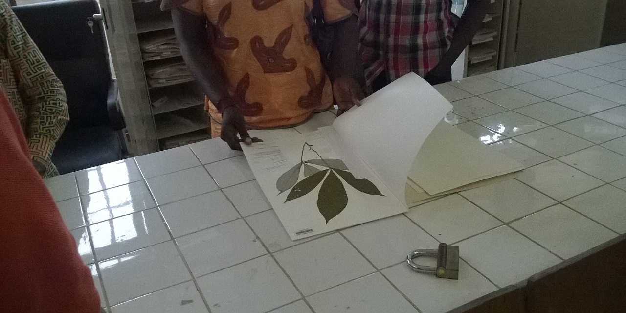 Photo de l'herbier de Guinée 1
